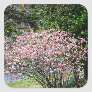 Pink Tree and Daffodils Square Sticker