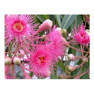 Pink Tree Blossoms Postcard