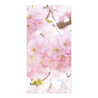 Pink Tree Cherry Blossom Card