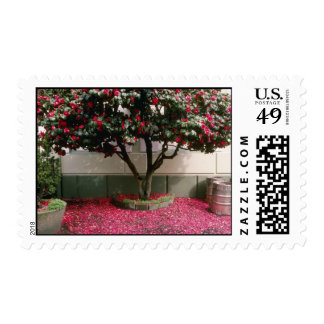 Pink Tree in the town of St. Helier flowers Postage
