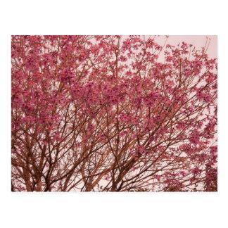 Pink Tree Photography Postcard