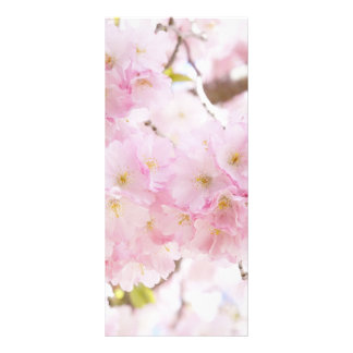 Pink Tree Sakura Cherry Blossom Rack Card