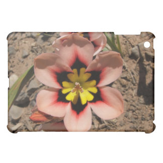 Pink Tricolored Sparaxis Flower Cover For The iPad Mini