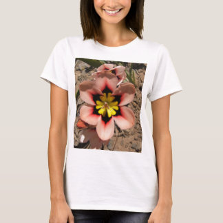 Pink Tricolored Sparaxis Flower T-Shirt