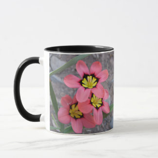 pink tricolored sparaxis flowers mug