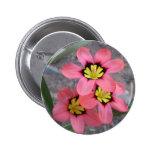 pink tricolored sparaxis flowers pinback buttons
