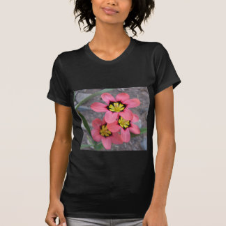 pink tricolored sparaxis flowers T-Shirt