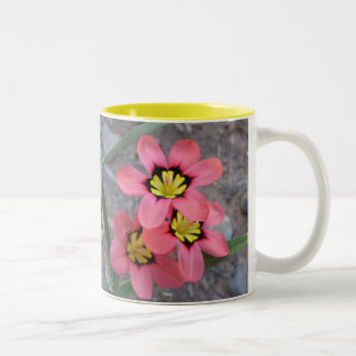 pink tricolored sparaxis flowers Two-Tone coffee mug