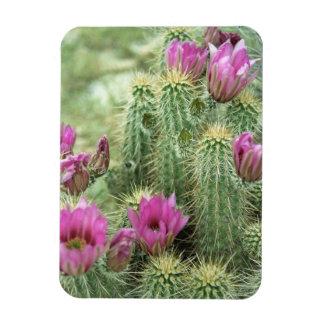 Pink Trill Bloom Cactus Decorative Fridge Magnets