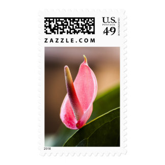 Pink Tropical Flower Stamp