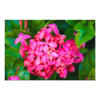 Pink Tropical Flowers Art Photo