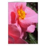 Pink Tuberous Begonia Greeting Card
