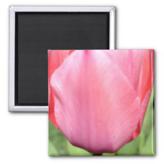 Pink Tulip 2 Magnet