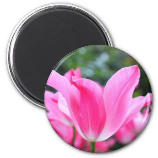 Pink tulip beauty 2 inch round magnet