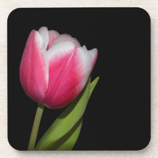 Pink Tulip Beverage Coaster