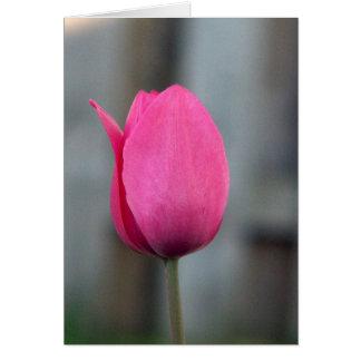 Pink Tulip Card