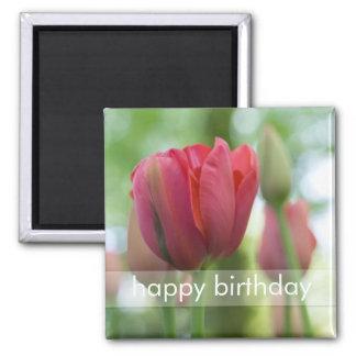 Pink Tulip Close-up DSC0866 2 Inch Square Magnet