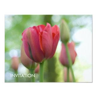 Pink Tulip Close-up DSC0866 Card