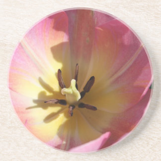 Pink tulip closeup beverage coasters