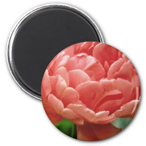 Pink Tulip 'Eros', double late flowers 2 Inch Round Magnet