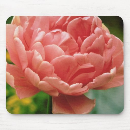 Pink Tulip 'Eros', double late flowers Mouse Pad