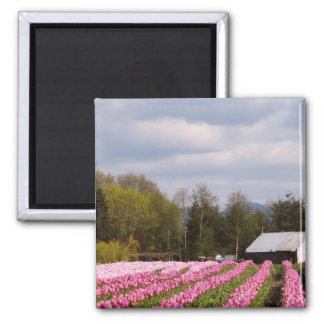 Pink Tulip Field 2 Inch Square Magnet
