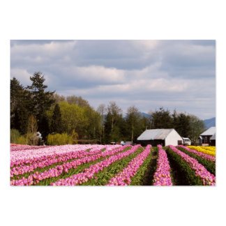 Pink Tulip Field Large Business Cards (Pack Of 100)