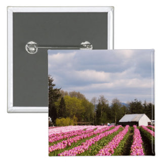 Pink Tulip Field Pinback Buttons