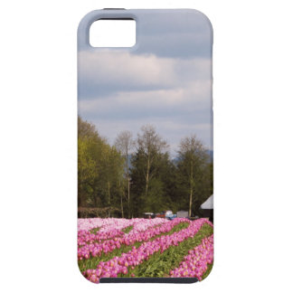 Pink Tulip Field iPhone 5 Cases