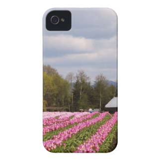 Pink Tulip Field iPhone 4 Covers
