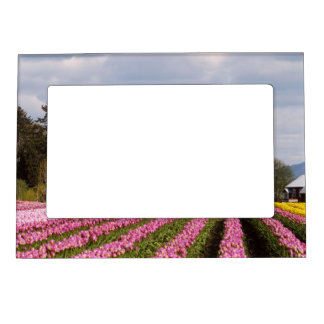 Pink Tulip Field Magnetic Photo Frame