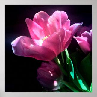 Pink Tulip Fine Art Poster