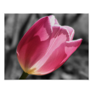 Pink Tulip Flower Black And White Poster