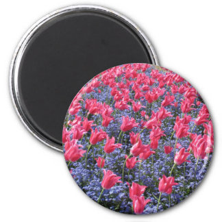 Pink Tulip Flower Carpet Magnet