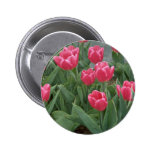 Pink tulip flowers button