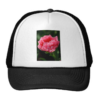 Pink Tulip Hats