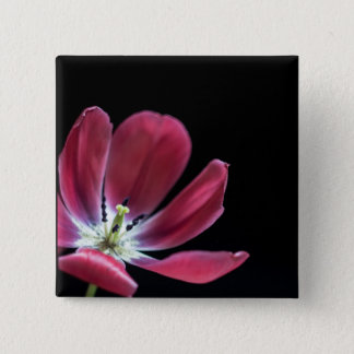 pink tulip in bloom on a black background pinback button