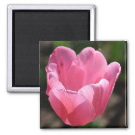 Pink tulip fridge magnet