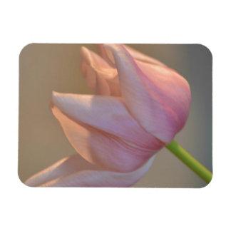 Pink Tulip Magnet