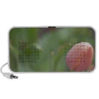 Pink Tulip Mp3 Speaker