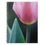 Pink Tulip Note Books