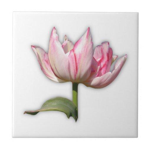 Pink tulip petals with cleroy61 frame azulejo cuadrado pequeño