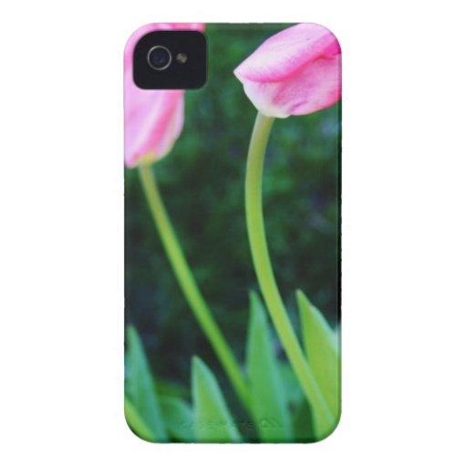 Pink Tulip Photo iPhone 4 Case-Mate Case