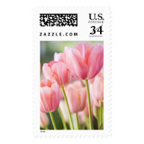 Pink Tulip Postage Stamps