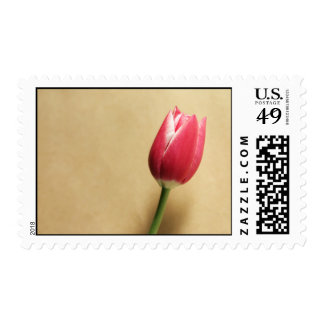 Pink Tulip Single Flower Postage