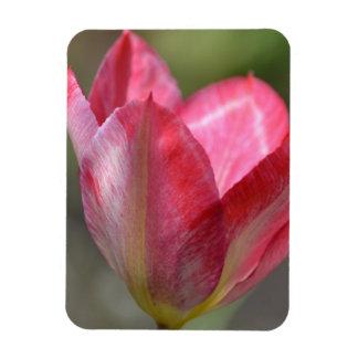 Pink Tulip Spring Flower Magnet
