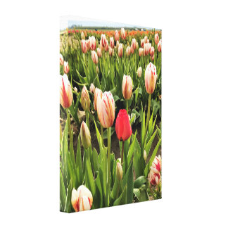 Pink Tulip Standing Out Canvas Print