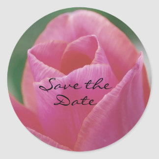 Pink Tulip Sticker