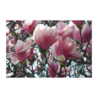 """Pink """"Tulip Tree"""" Blossoms Wrapped Canvas Print"""