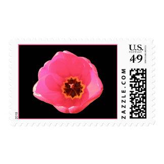 Pink Tulip US Postage Stamp